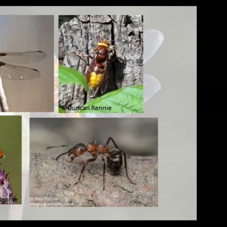 Essential Insects with Dr Cath