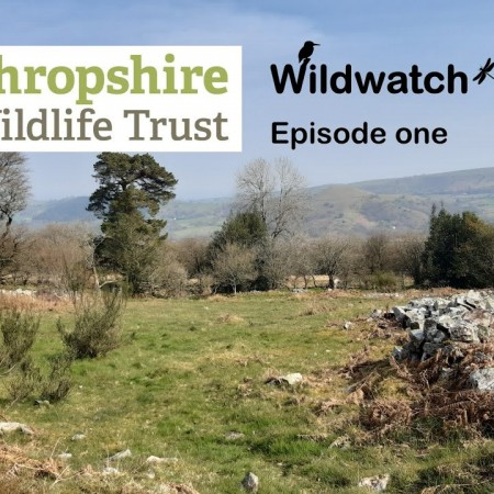 Shropshire Wildwatch (almost live!)