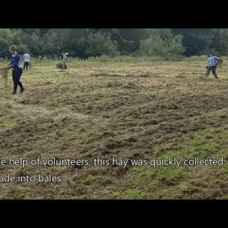 Lightmoor hay meadow cut