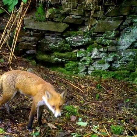 John's Wood wildlife cams 1